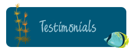 Read Our Pediatric Dentist and Orthodontic Testimonials for our office in Tampa, FL